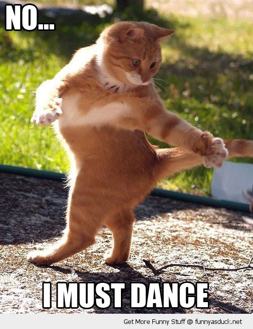 i must dance dancing cat animal lolcat funny pics pictures pic picture image photo images photos lol