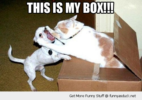 my box angry cat attacking dog animal funny pics pictures pic picture image photo images photos lol