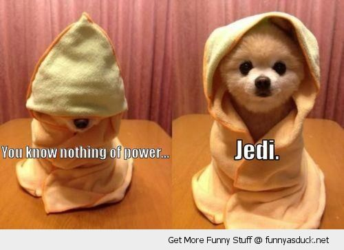 jedi star wars dog puppy animal underestimate power movie cute funny pics pictures pic picture image photo images photos lol