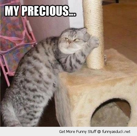 my precious cat lolcat scratching post evil crazy animal funny pics pictures pic picture image photo images photos lol