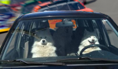 we got this dogs car animal race driver driving nascar track funny pics pictures pic picture image photo images photos lol