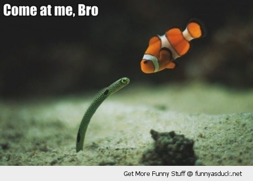 nemo clown fish sea ocean worm animal come at me bro funny pics pictures pic picture image photo images photos lol
