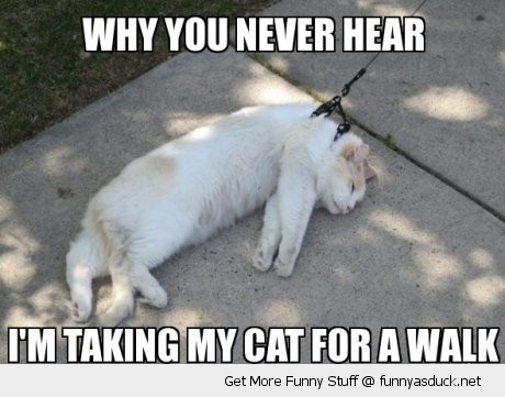 why you never hear walk cat animal lolcat lead leash no lying down ground funny pics pictures pic picture image photo images photos lol