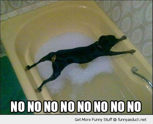 no dog animal bath tub stuck funny pics pictures pic picture image photo images photos lol