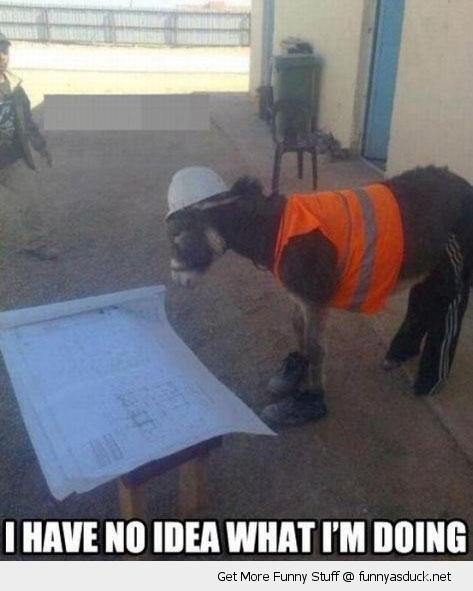 no idea what I'm doing work man builder donkey ass animal funny pics pictures pic picture image photo images photos lol