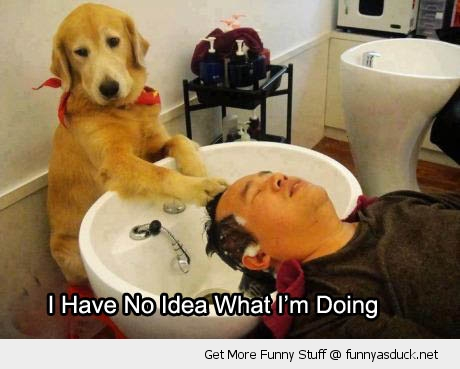 dog washing mans hair salon no idea doing animal funny pics pictures pic picture image photo images photos lol