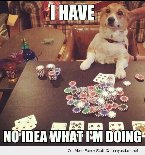 no idea what I'm doing dog playing poker animal cards funny pics pictures pic picture image photo images photos lol