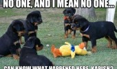 nobody can know happened here dogs puppys soft toy animals funny pics pictures pic picture image photo images photos lol