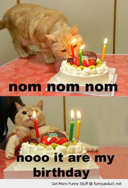 om nom birthday cat lolcat animal cake candles pulled away no funny pics pictures pic picture image photo images photos lol