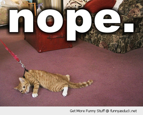 nope lazy cat walk leash lead animal lolcat funny pics pictures pic picture image photo images photos lol