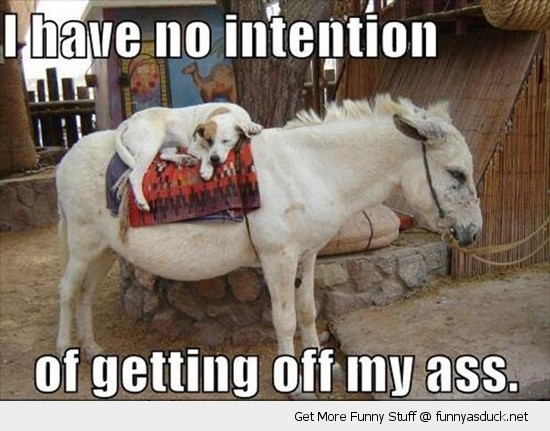 no intention getting of ass donkey animal dog lazy funny pics pictures pic picture image photo images photos lol