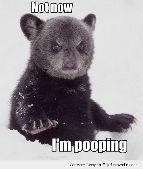 not now angry bear cub snow pooping animal funny pics pictures pic picture image photo images photos lol