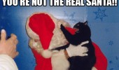 not real santa cat attacking scratching animal funny pics pictures pic picture image photo images photos lol