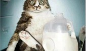 not what it looks like fat cat lolcat milk animal funny pics pictures pic picture image photo images photos lol