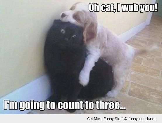 oh cat love you dog animal hugging cuddling count to three animal funny pics pictures pic picture image photo images photos lol