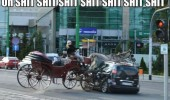 oh shit horse cart crashing car road animal out control funny pics pictures pic picture image photo images photos lol