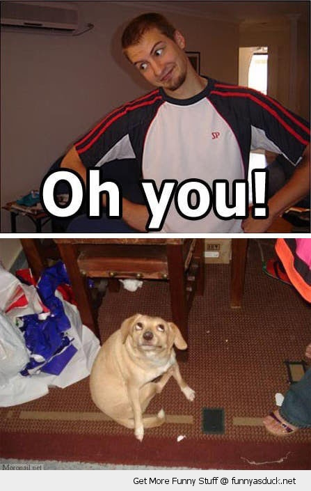 oh you dog animal face eyes man cute funny pics pictures pic picture image photo images photos lol