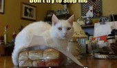 i'm on a roll cat lolcat bread loaf lying animal pun funny pics pictures pic picture image photo images photos lol