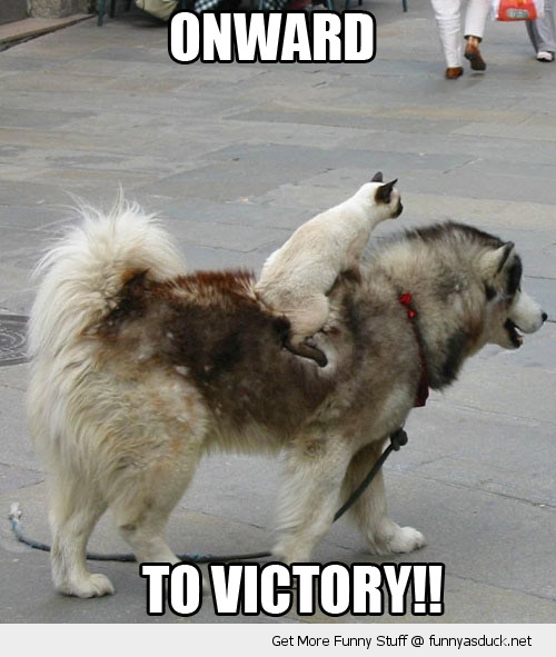 Onward Dog Funny Duck Pictures Jpeg Courtesy