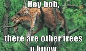 bob other trees lynx big cat animal lying on top funny pics pictures pic picture image photo images photos lol
