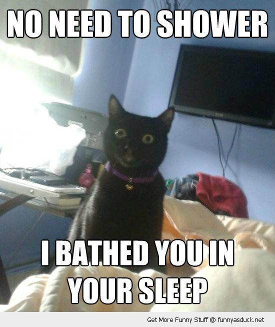 overly attached cat no shower bathed sleep lolcat animal funny pics pictures pic picture image photo images photos lol