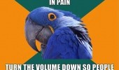 paranoid parrot meme watching porn funny pics pictures pic picture image photo images photos lol