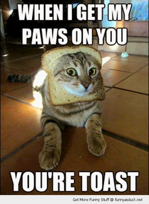 paws on you cat animal lolcat bread head you're toast funny pics pictures pic picture image photo images photos lol