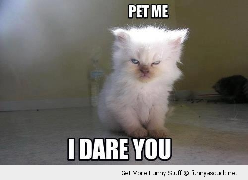 pet me dare you angry cat kitten lolcat animal funny pics pictures pic picture image photo images photos lol
