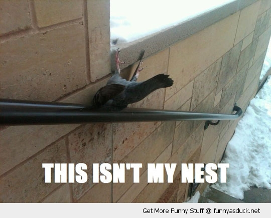 isn't my nest bird pigeon stuck hand rail banister animal funny pics pictures pic picture image photo images photos lol