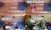 dishes piled up sink what are you doing stahp student funny pics pictures pic picture image photo images photos lol