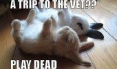 trip to vet play dead rabbits bunnies animals cute funny pics pictures pic picture image photo images photos lol