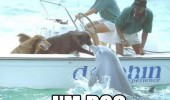 pleased meet you dolphin dog boat animal friends shaking hands funny pics pictures pic picture image photo images photos lol