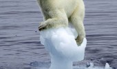 polar bear stuck ice cap fuck the pole ice animal Antarctica funny pics pictures pic picture image photo images photos lol