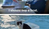 i should buy a boat posh cat suit this sucks swimming pool container funny pics pictures pic picture image photo images photos lol