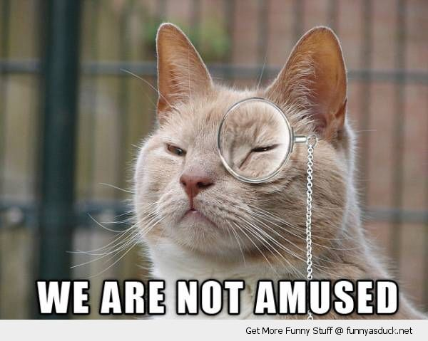we are not amused cat lolcat animal posh sir monocle grumpy angry funny pics pictures pic picture image photo images photos lol