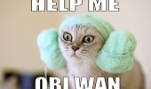 help me obi wan star wars cat lolcat animal princess leah funny pics pictures pic picture image photo images photos lol