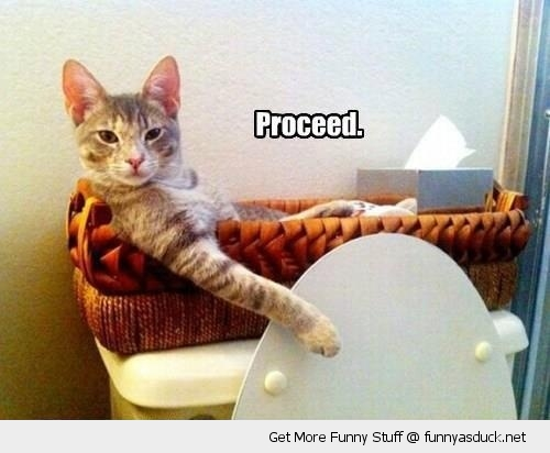 cat lolcat animal sitting toilet basket proceed funny pics pictures pic picture image photo images photos lol