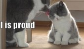 proud cat lolcat kitten animal mouse funny pics pictures pic picture image photo images photos lol