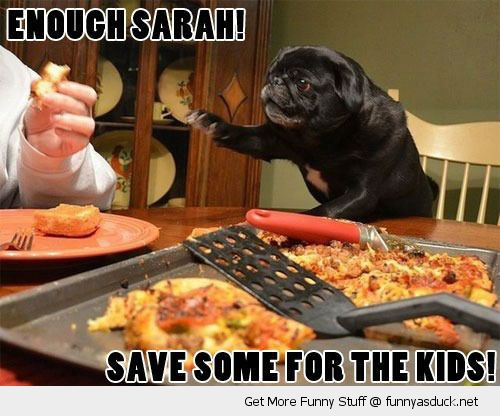 pug dog dinner table enough sarah save some pizza kids animal funny pics pictures pic picture image photo images photos lol