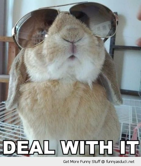 deal with it rabbit animal bunny cool sun glasses shades funny pics pictures pic picture image photo images photos lol