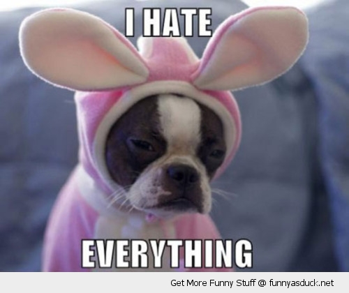 hate everything dog pug puppy animal bunny ears rabbit costume sad funny pics pictures pic picture image photo images photos lol