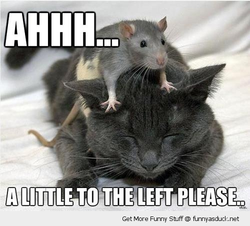 ahh little left please rat massaging cats head animals rodent lolcat funny pics pictures pic picture image photo images photos lol