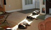 death ray light cats dogs sleeping animals funny pics pictures pic picture image photo images photos lol