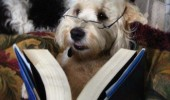 reading book dog animal 50 shades of gray animal glasses funny pics pictures pic picture image photo images photos lol