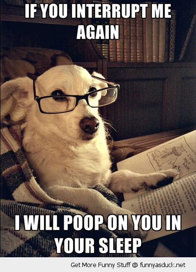 dog animal reading book glasses interrupt me poop you sleep funny pics pictures pic picture image photo images photos lol