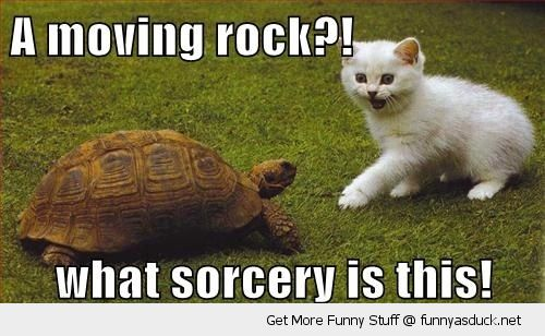 shocked surprised cat lolcat animal moving rock tortoise turtle sorcery funny pics pictures pic picture image photo images photos lol
