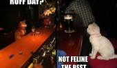 ruff day feline the best dog cat lolcat animals bar pub funny pics pictures pic picture image photo images photos lol