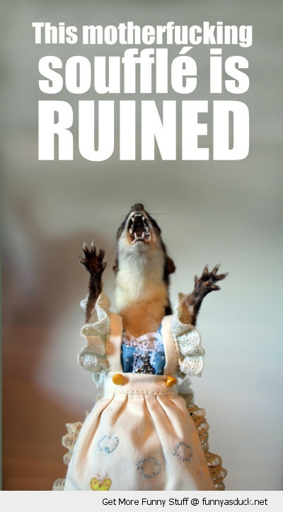 ruined souffle upset weasel rodent animal dress funny pics pictures pic picture image photo images photos lol
