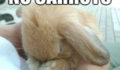 sad cute bunny rabbit animal no carrots funny pics pictures pic picture image photo images photos lol