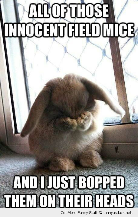 sad bunny rabbit animal innocent mice bopped heads funny pics pictures pic picture image photo images photos lol